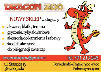 Dragon ZOO