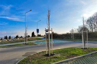 Kilkadziesiąt nowych drzew w mieście