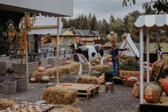 Powstała pierwsza farma dyniowa w południowo-wschodniej Polsce